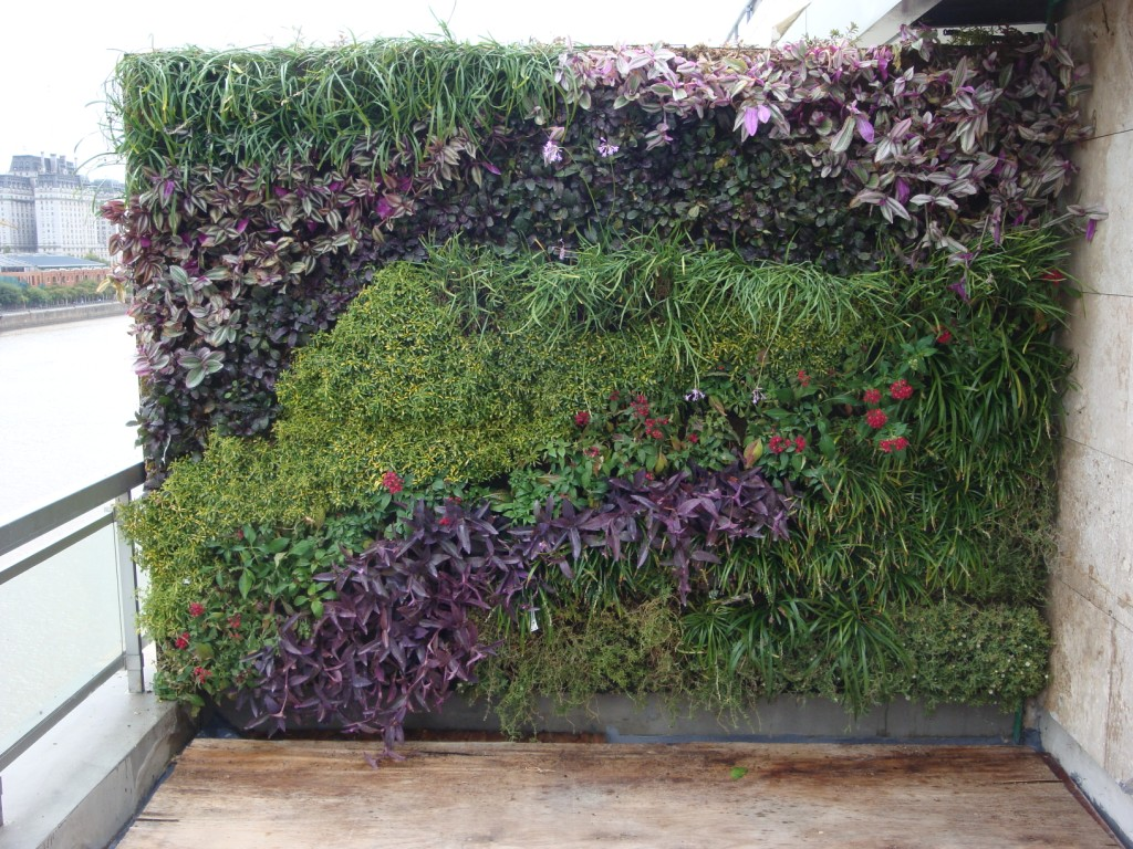 Jardin vertical for Plantas jardin vertical exterior