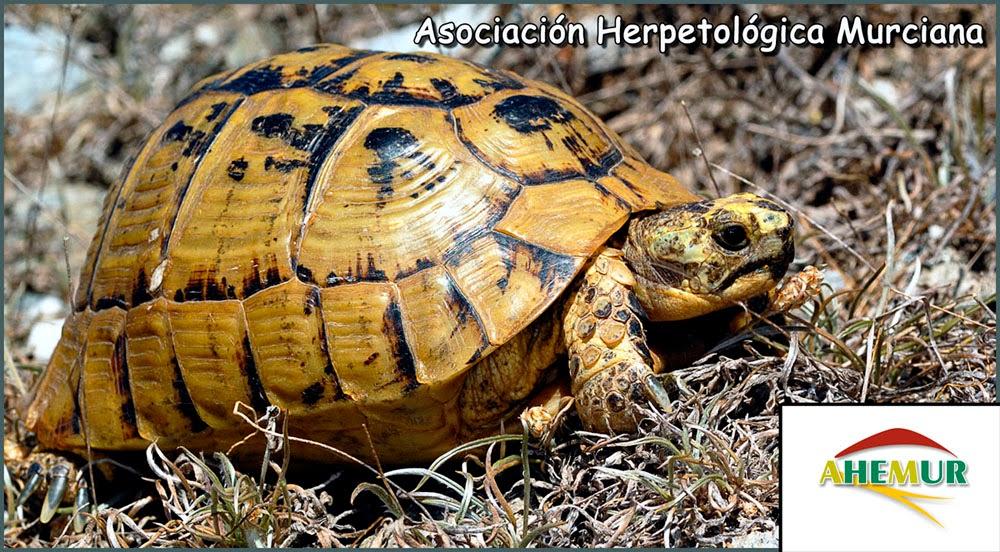 AHEMUR Asociación Herpetológica Murciana