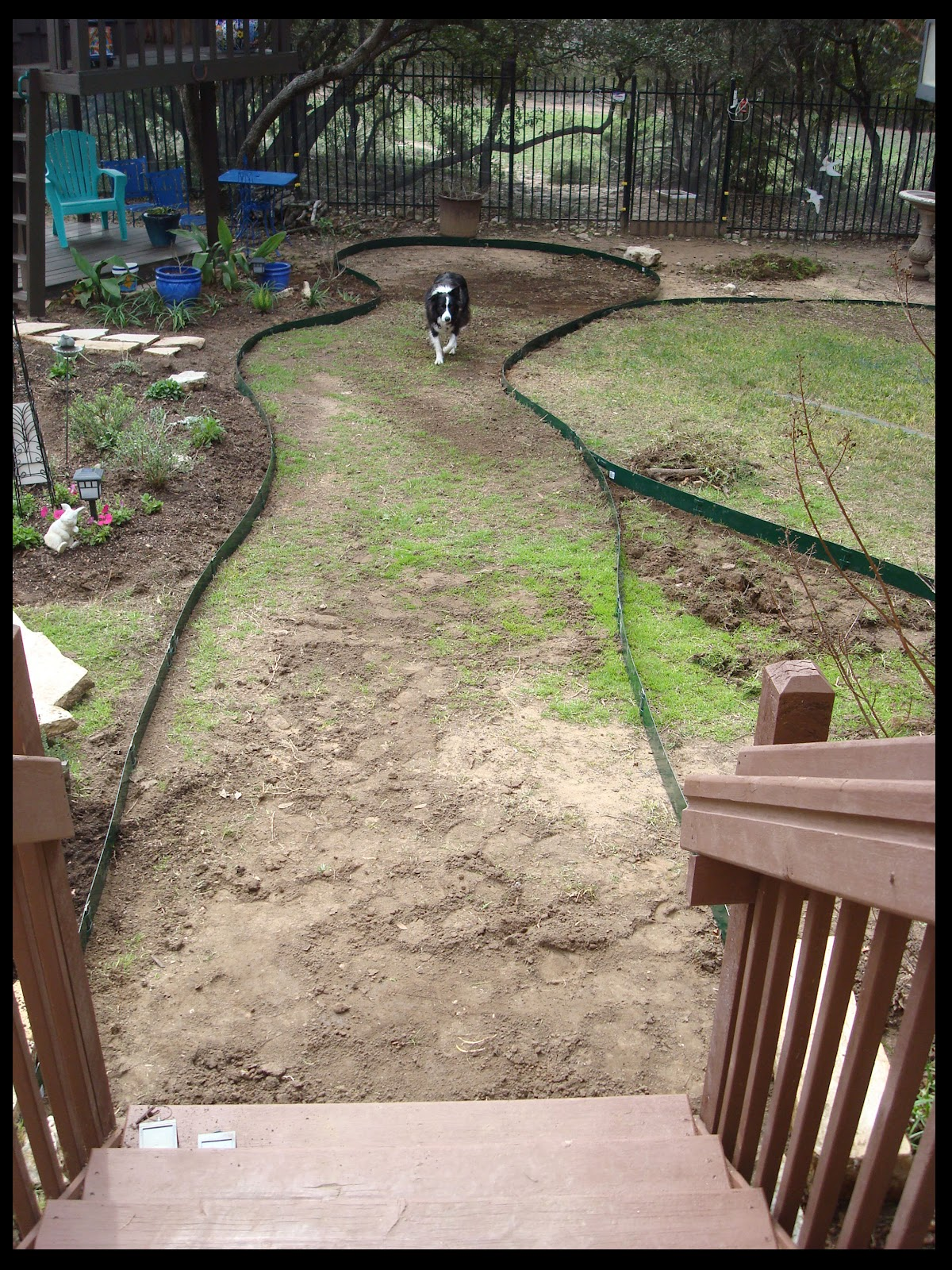 Pea Gravel Backyard For Dogs : Garden Path Wanderings February 2012