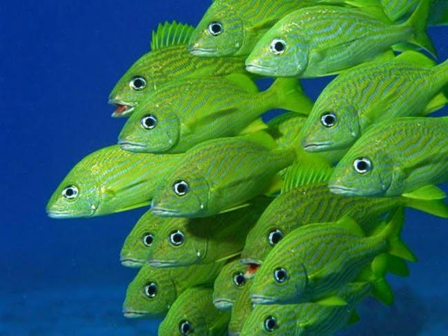 أجمل الأسماك الاستوائية الملونة   - صفحة 4 Colorful-tropical-fishes-05