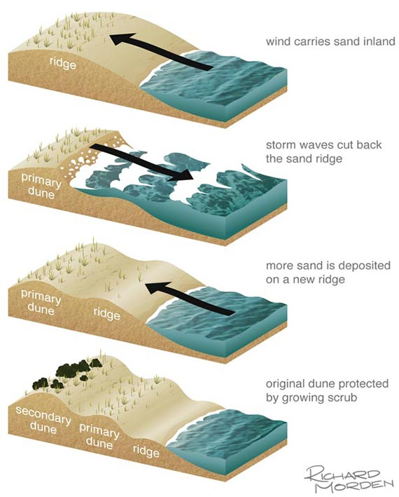 diagram of natural processes - Formation of sand dunes