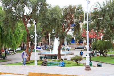 Polylepis Trees Plaza Regocijo