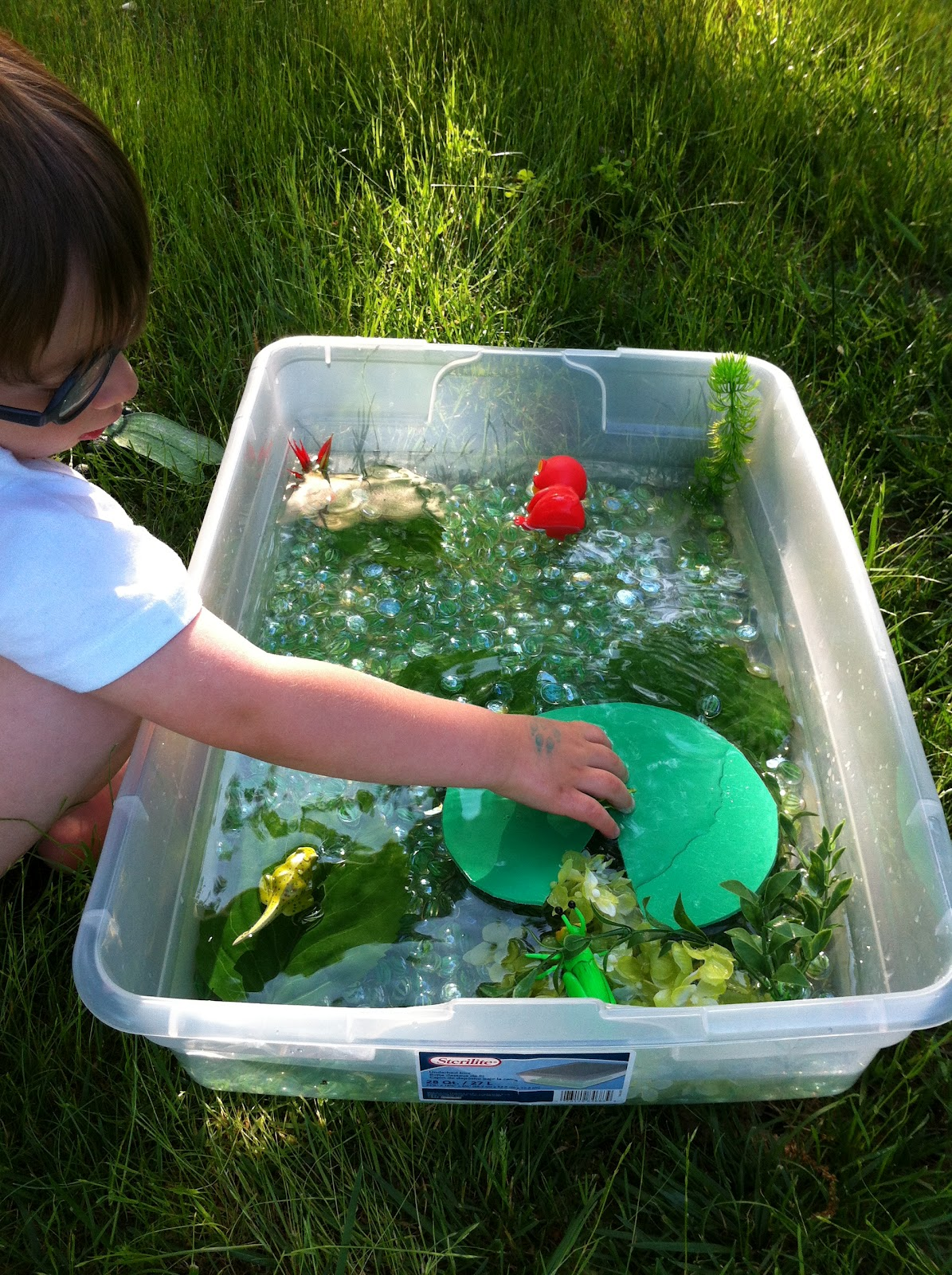 Play create explore pond lifecycle of a frog sensory bin for Making a small pond