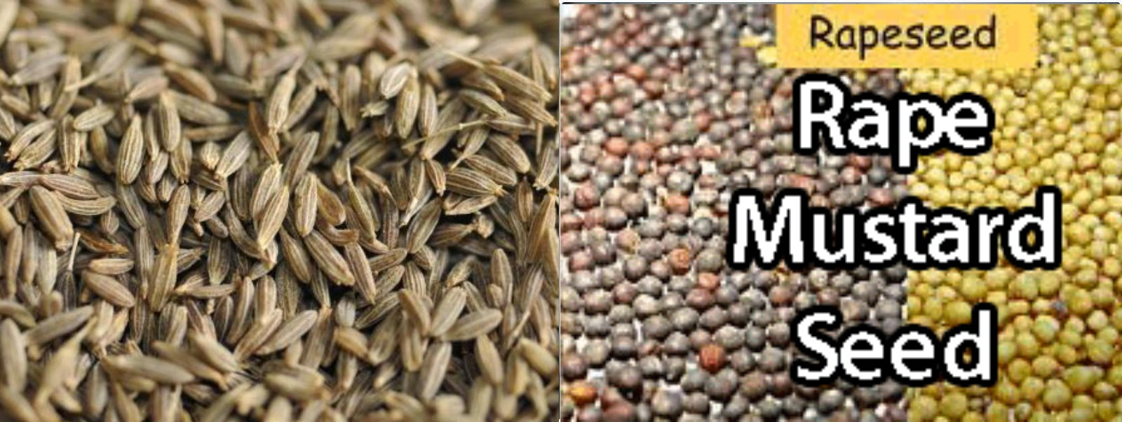 Agri Commodity Tips , Best NCDEX Tips Provider , Agri Commodity Trading , Agri Trading Tips , RM Seed Tips