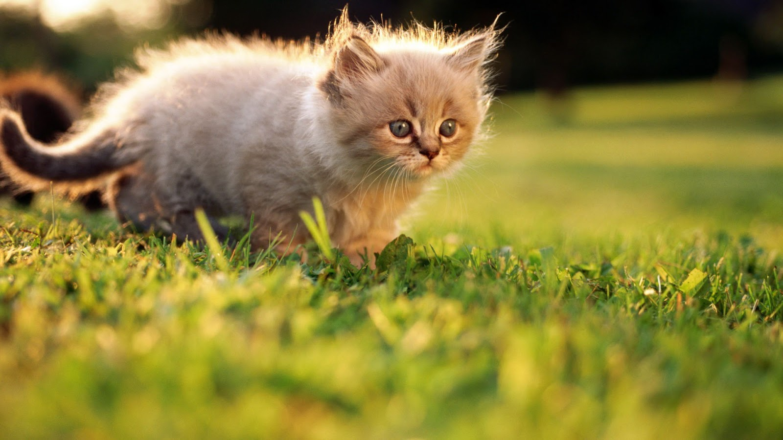 Activating Thoughts: Cute Cats and kittens