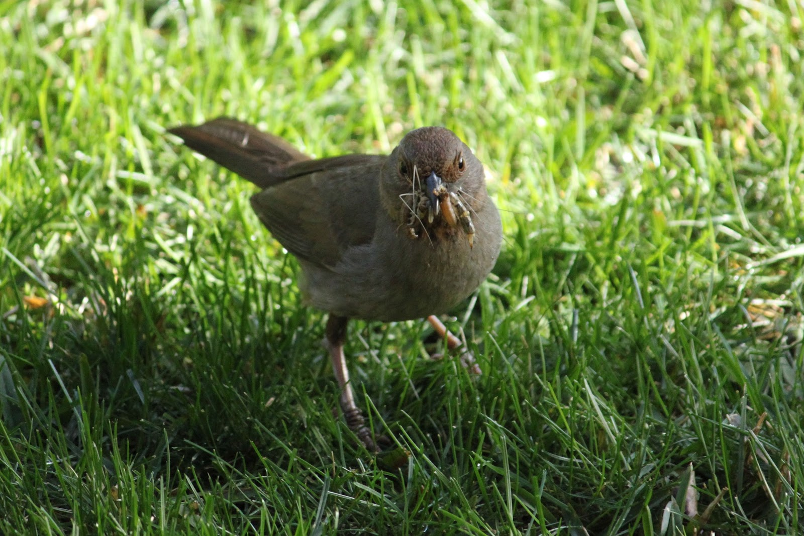 the backyard birder make mulch for insect eating birds