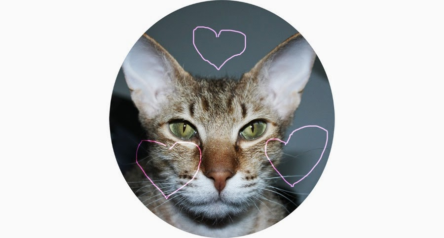 Niedlichkeitsfaktor endlichniedlich Kleiderkreisel Aprilscherze lustig niedlich Katze Yoda Peterbald Herz