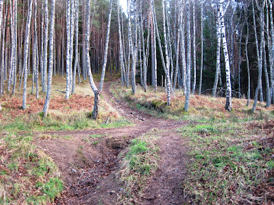Deeside walks: a junction in the path up Pannanich Hill