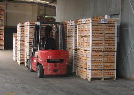 Mango peruano envasado y paletizado - Pallets por contenedor ...