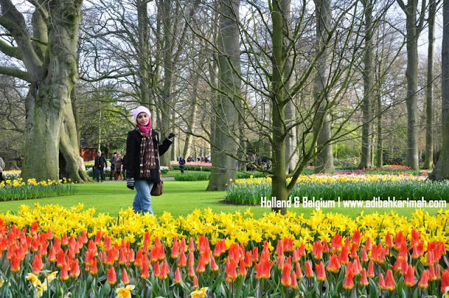 Free holiday trip to Holland and Belgium for premium beautiful top agent with tulips flower in keukenhof