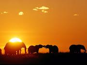 Conheça o Blog Poesias de um Elefante.