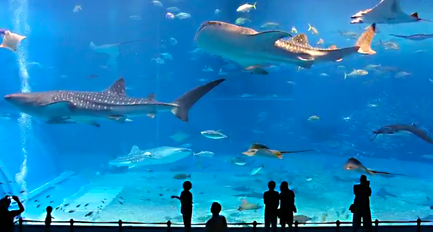 Awesome Stuff Kuroshio Sea 2nd Largest Aquarium Tank In