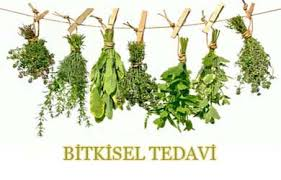 Basur bitkisel tedavi