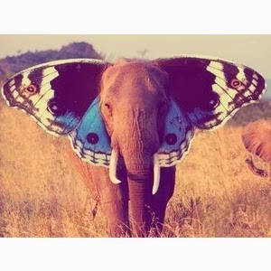 Elephant♥