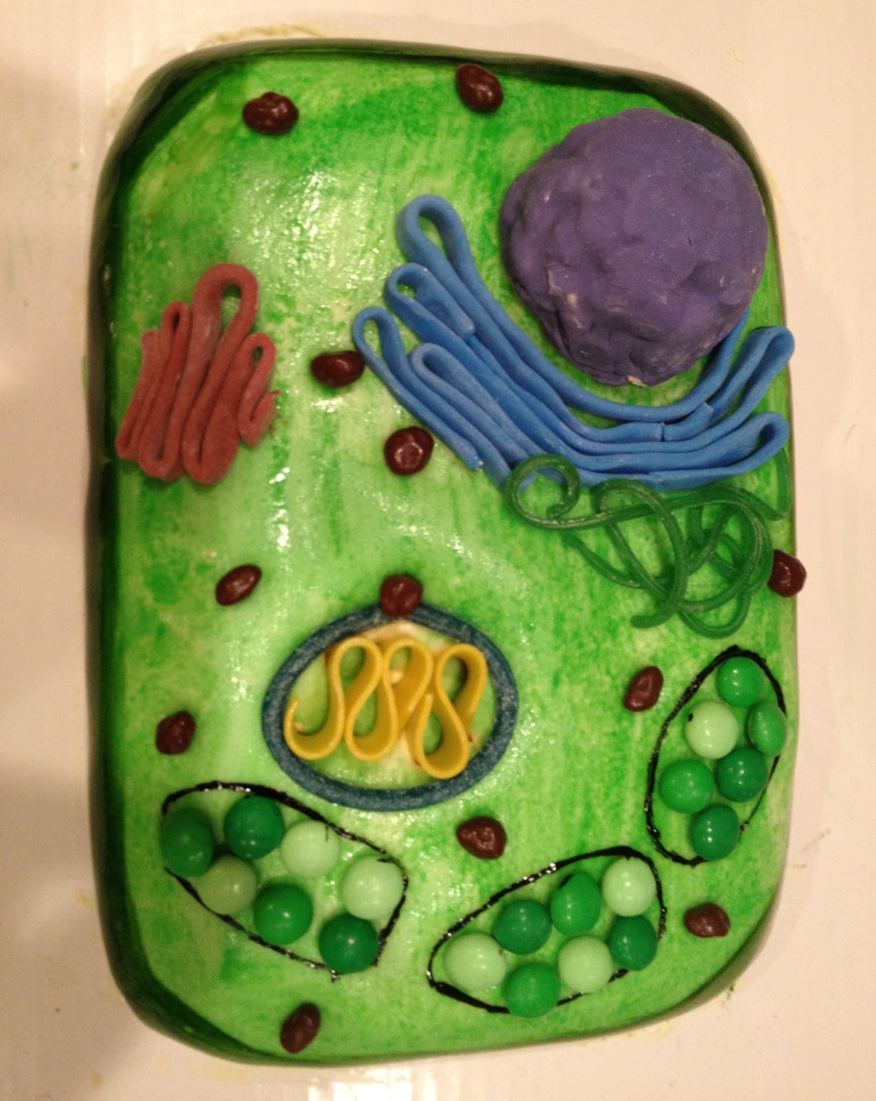 Custom cakes by eileen plant cell cake plant cell cake pooptronica Images