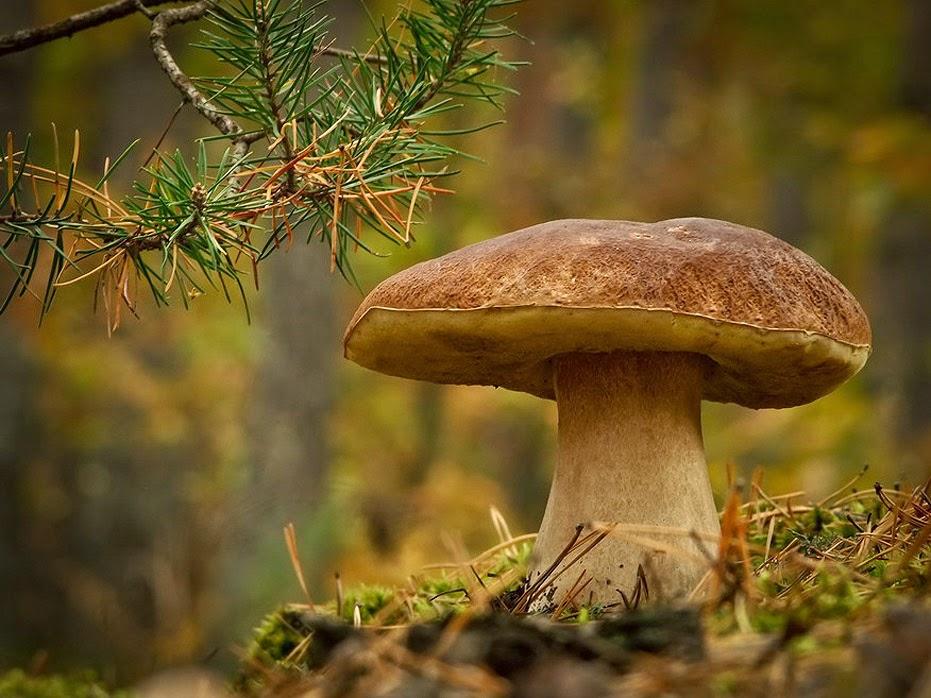 Улитка до самой смерти жила в одиночестве под старым грибом