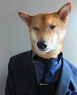 This dog could be richer than you! $15k a month