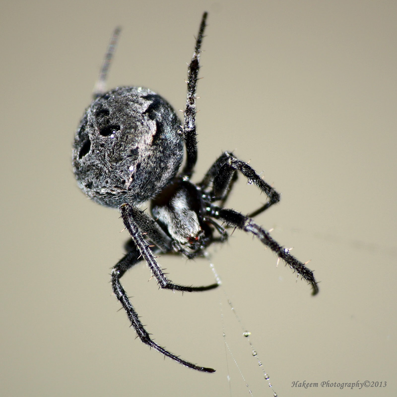 House Spider 3
