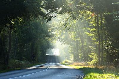 silhouette écureuil brume forêt Faontainebleau Seine-et-Marne