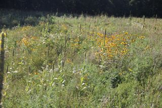 photo of Wild River wildflowers