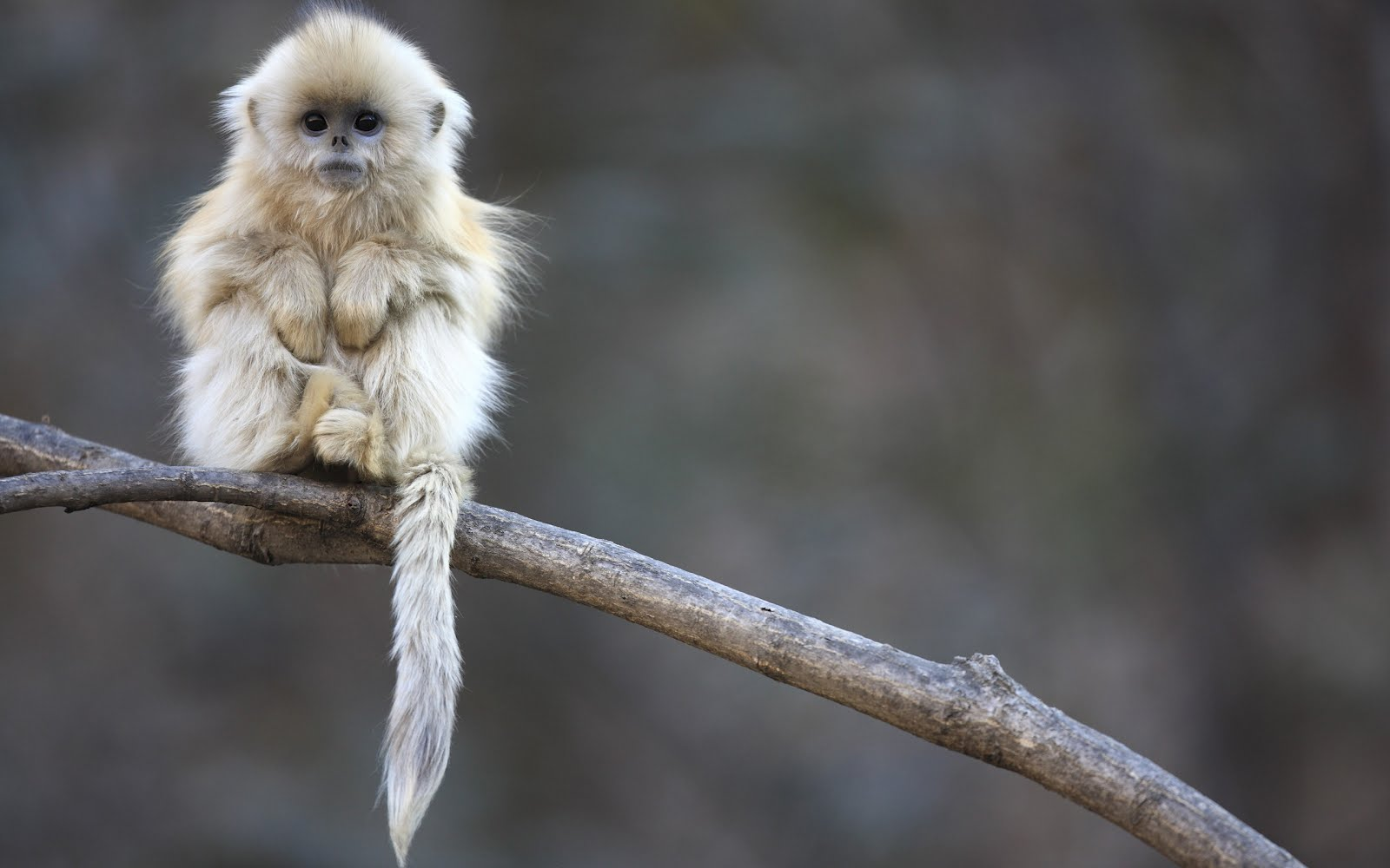 Un hermoso mono - Cute little monkey