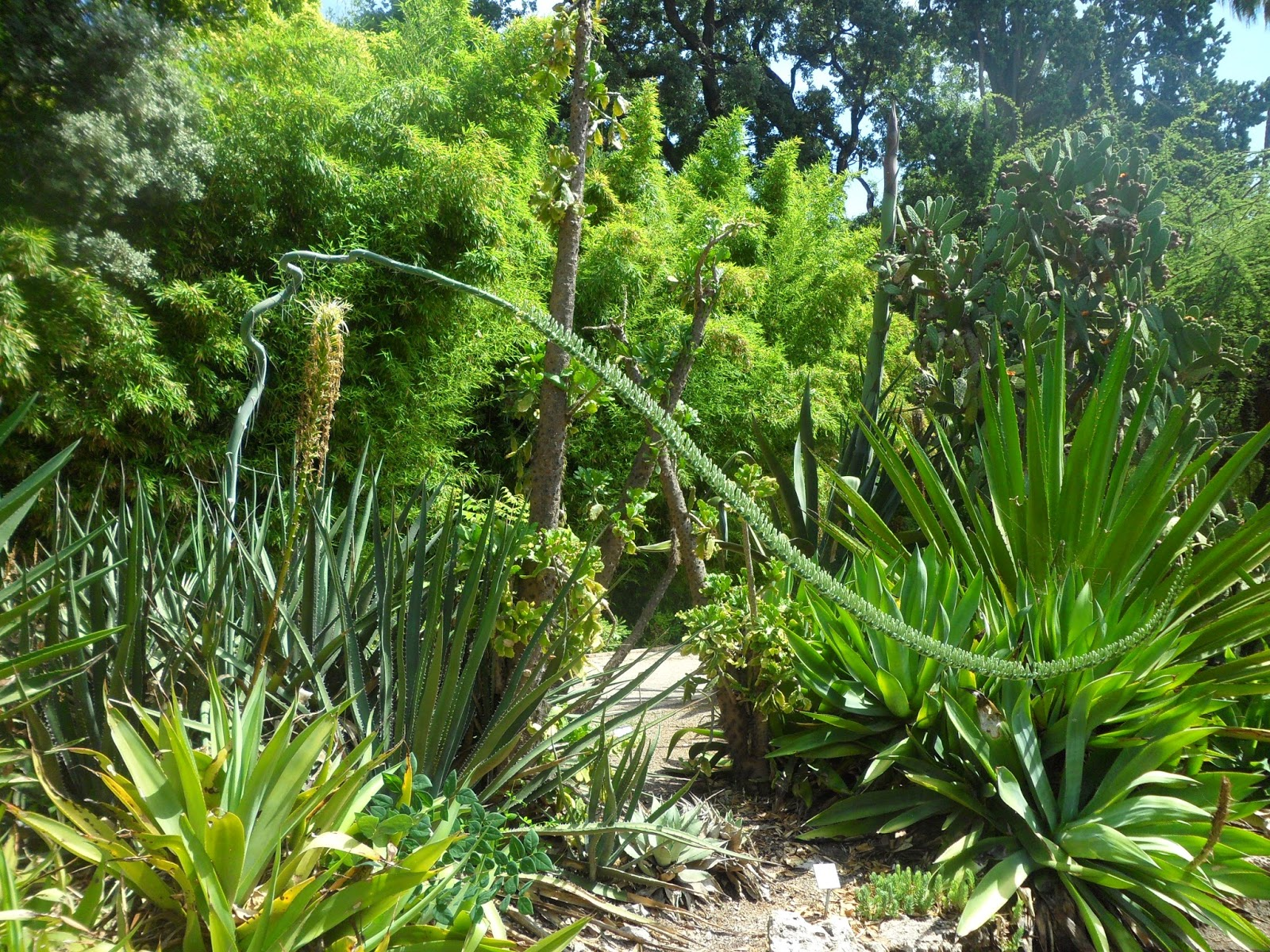 Visita al jard n bot nico de valencia - Jardin botanico valencia ...