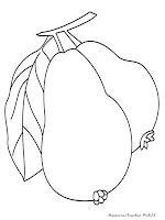kumpulan gambar mewarnai buah jambu yang telah dikumpulkan oleh gambar ...