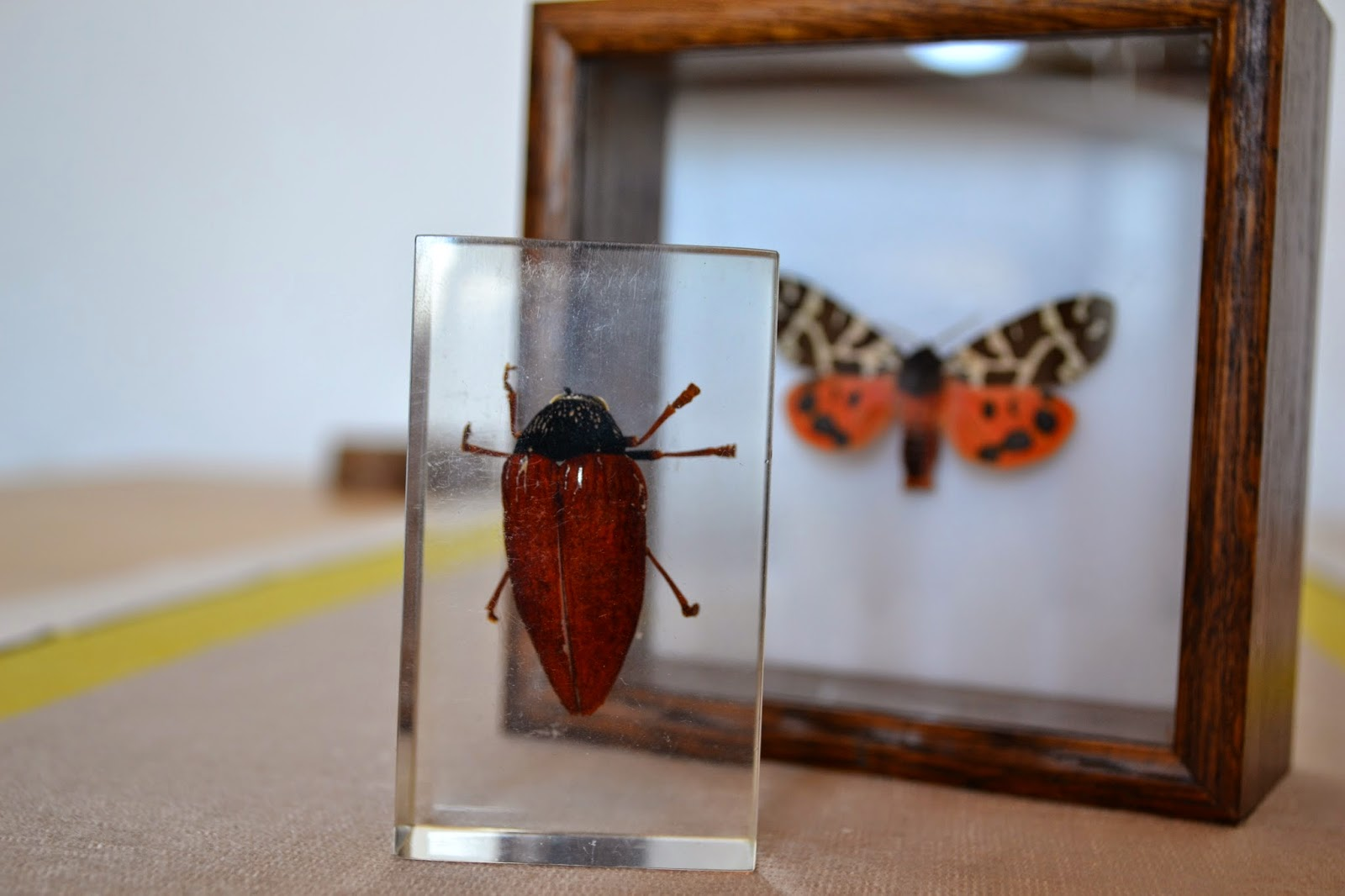 Jewel beetle in acrylic and garden tiger moth