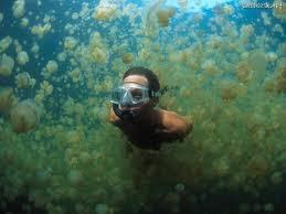 Jezera - Page 2 Jellyfish+Lake%252C+Palau+3