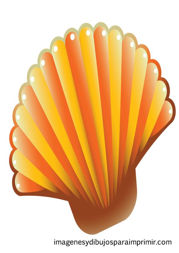 naranjas conchas de mar para imprimir concha con colores rojos conchas ...