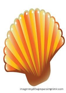 Concha con colores naranjas  Conchas de mar para imprimir