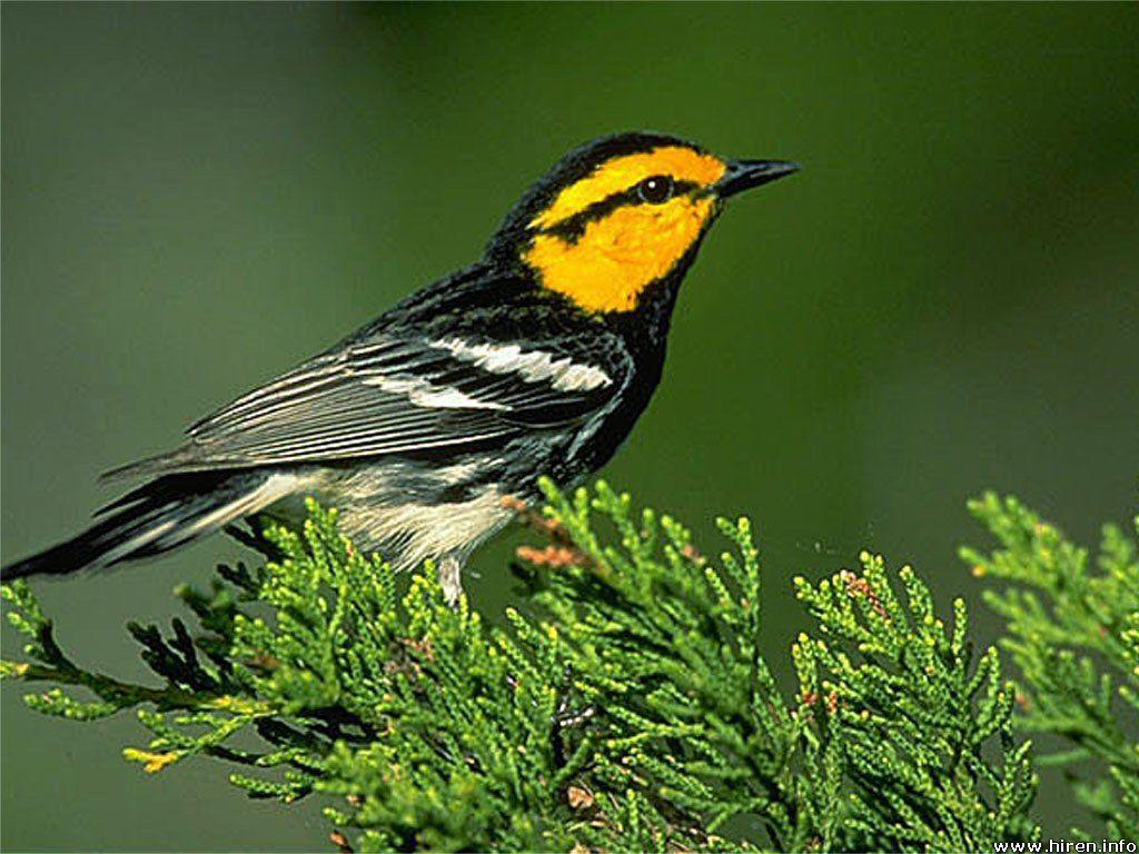 http://2.bp.blogspot.com/-ZLxpb9NGT68/UAGGima_mNI/AAAAAAAADrs/f8-RBB8EoNU/s1600/tree-bird-5t.jpg