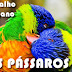 Os Pássaros no Petit Lenormand