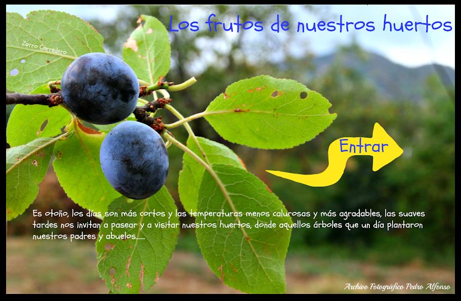 El fruto de nuestros huertos