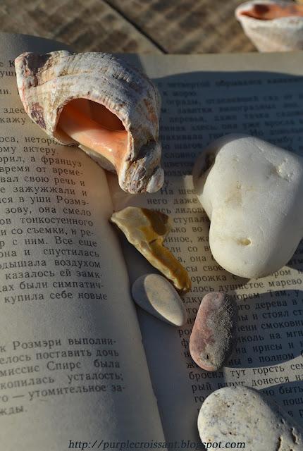 камушки , ракушки, книга с ракушками