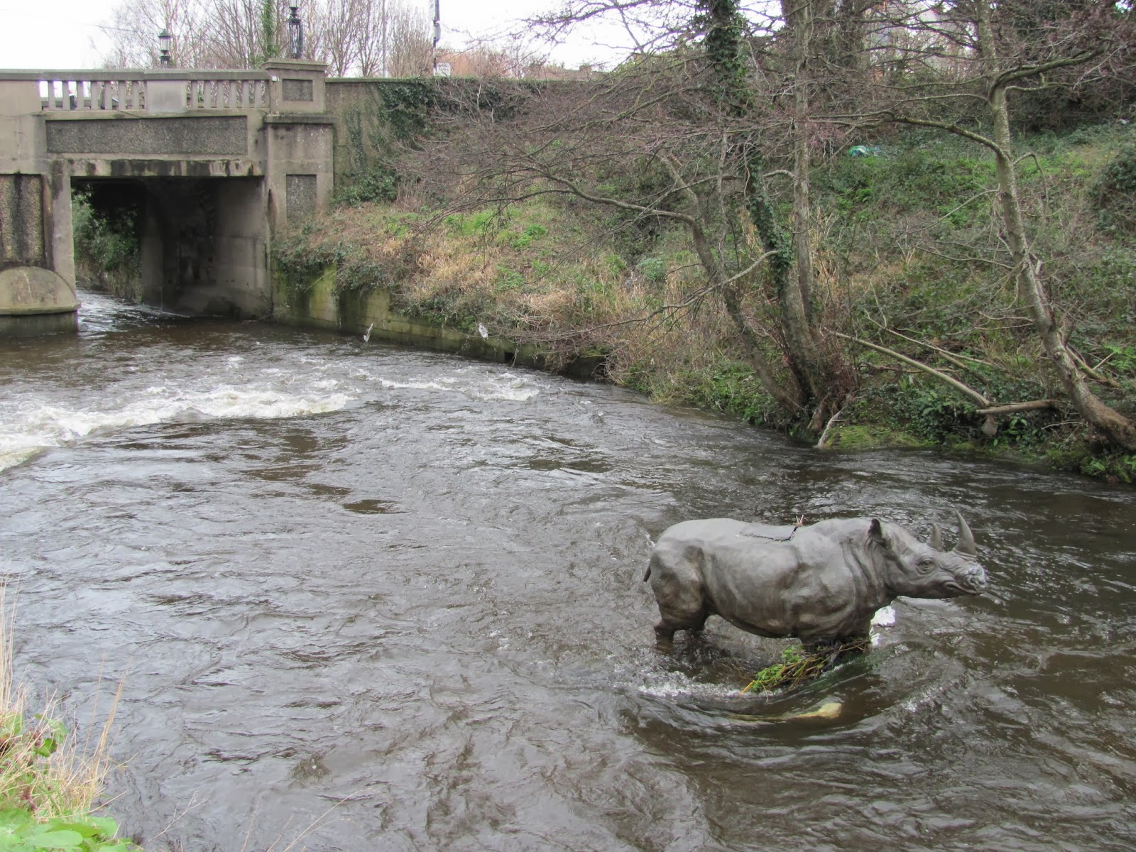 River Dodder Rhino with Classon's Bridge in Dublin