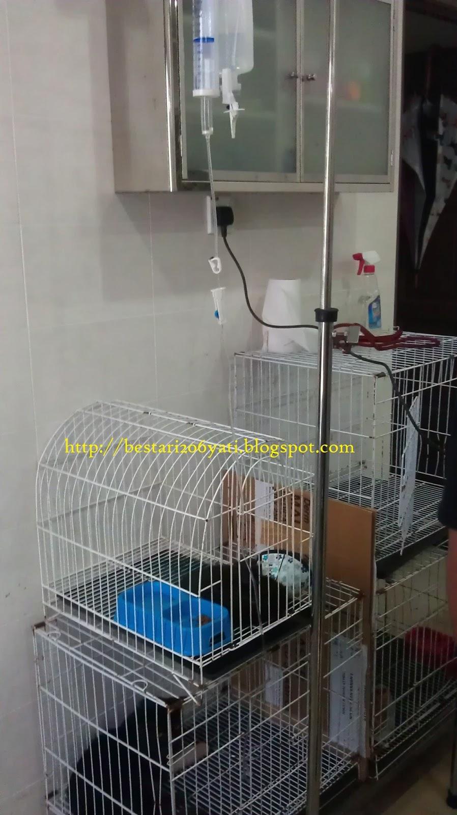 Ubat Kucing Kena Cacing Cintamanisz Lite Aksi Shin Kucing