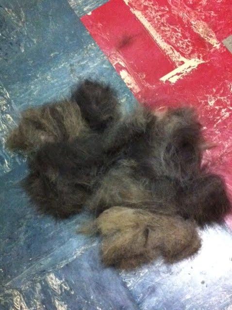 Dog Grooming High Oaks St Albans