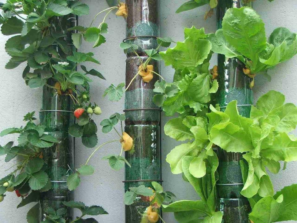 horta e jardim vertical : horta e jardim vertical:Vertical Vegetable Garden Planters