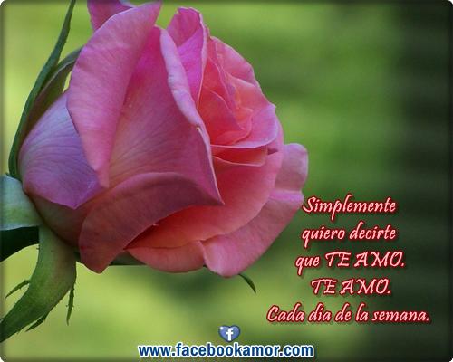 Imagenes De Rosas Con Palabras De Amor - Rosas poemas,frases y imagenes de amor Facebook