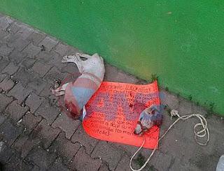 Degollan perros y dejan mensaje amenazante en contra de banda delincuencial en Acapulco
