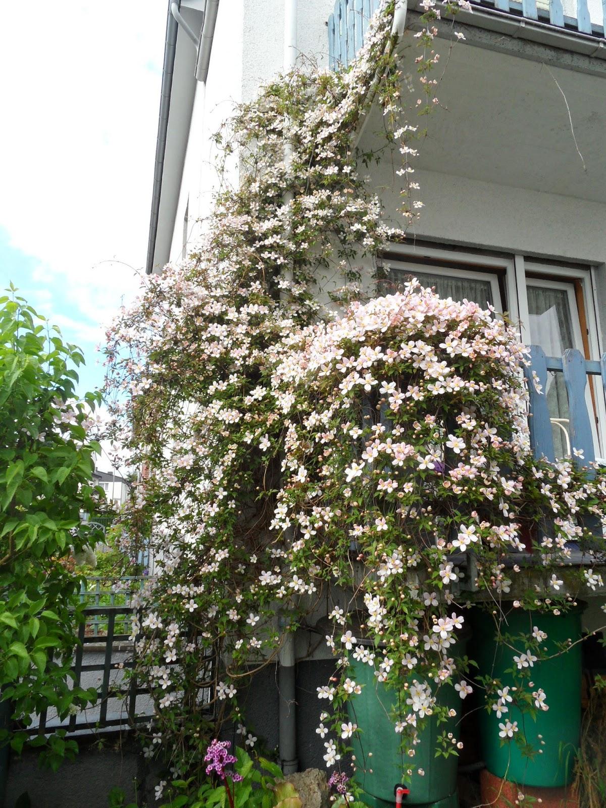 Annes kreativ blog es ist so weit for Balkon baum winterhart