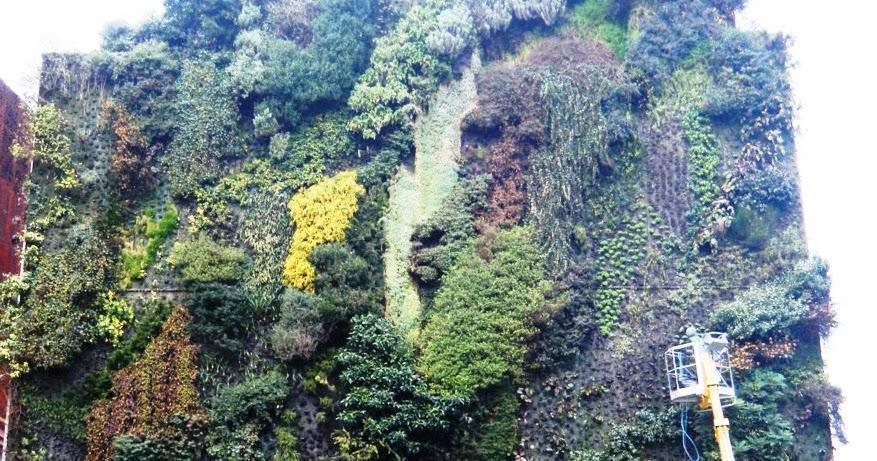 Mantenimiento jard n vertical del caixaforum jardines verticales y cubiertas vegetales - Jardin vertical caixaforum ...
