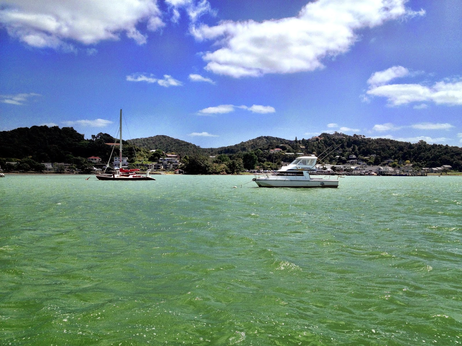 Scenery in the Bay of Islands