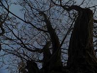 La danza de los árboles