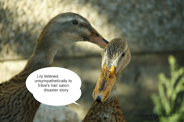 Princess Lily listened unsympathecially to Elsie's hair salon disaster story