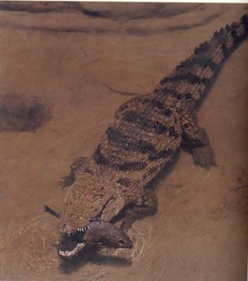 cocodrilo siames Crocodylus siamensis