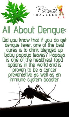 All About Dengue :