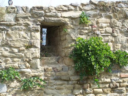 Salvatore lo leggio capperi di paolo pejrone - Piante per coprire muri ...