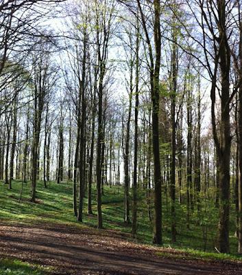 forår i skov